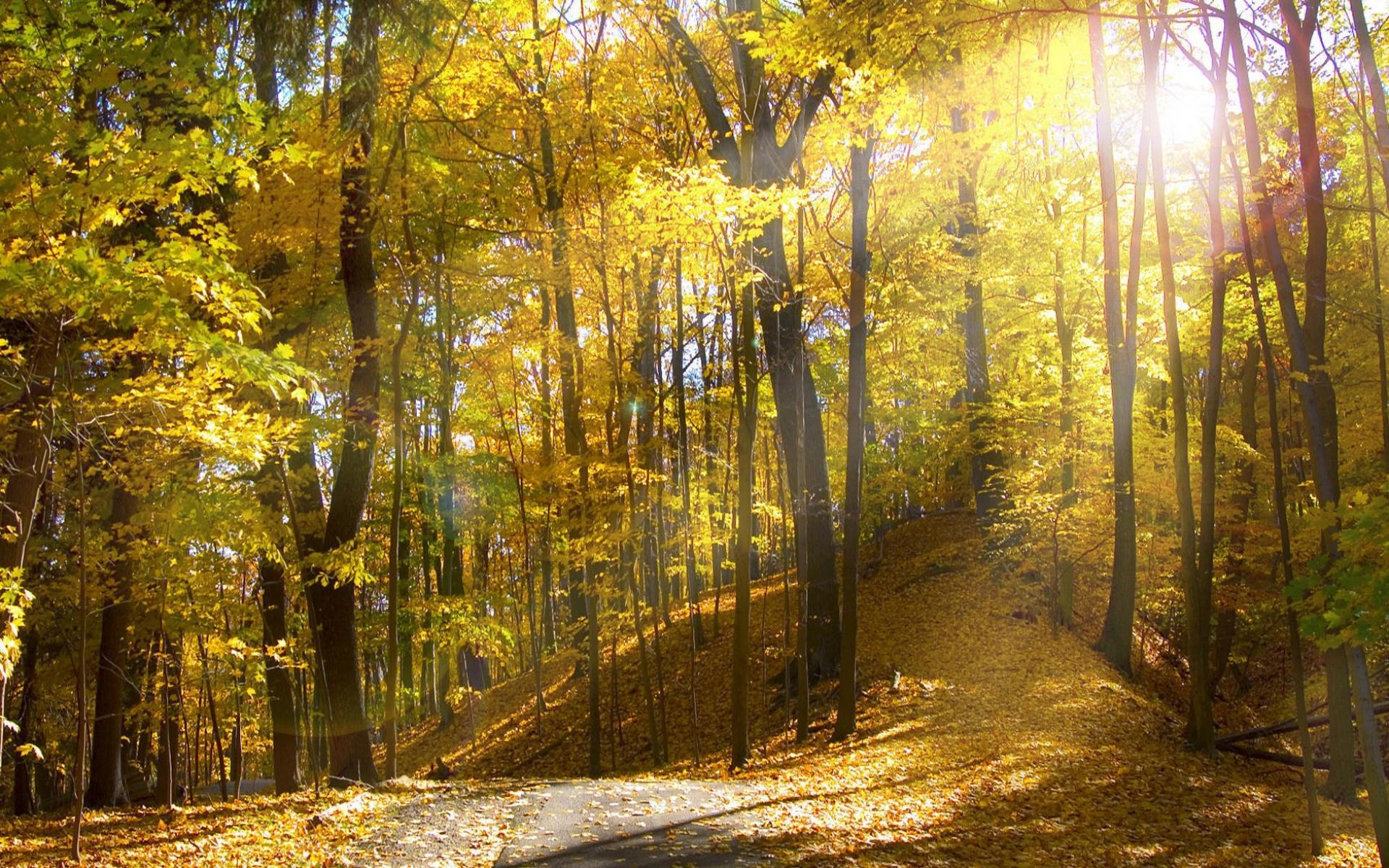 Осенний лес обои на рабочий стол   скачать бесплатно (12)