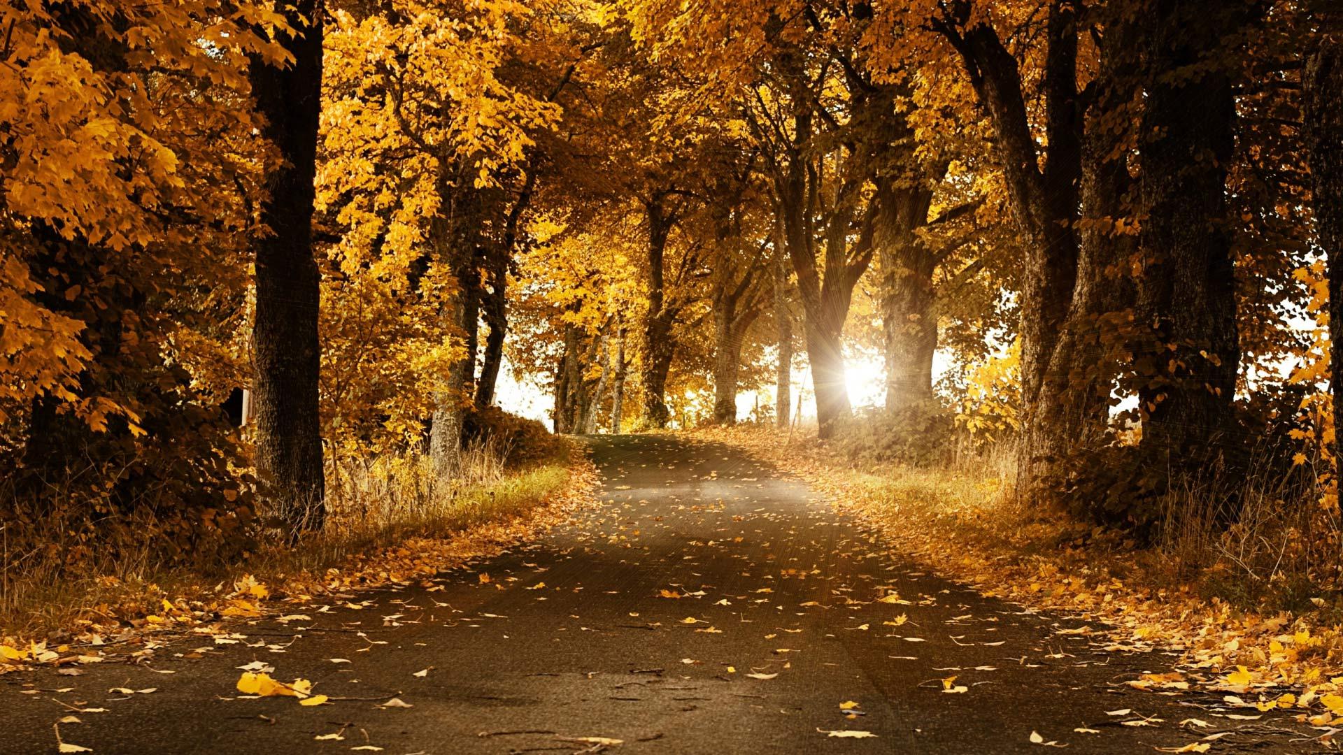 Осенний лес обои на рабочий стол   скачать бесплатно (13)