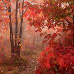 Осенний лес обои на рабочий стол — скачать бесплатно