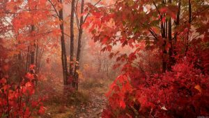 Осенний лес обои на рабочий стол   скачать бесплатно (14)