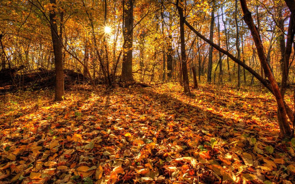 Осенний лес обои на рабочий стол   скачать бесплатно (15)
