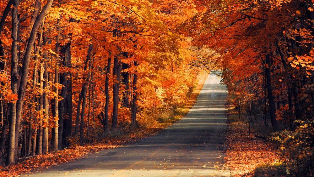 Осенний лес обои на рабочий стол   скачать бесплатно (2)