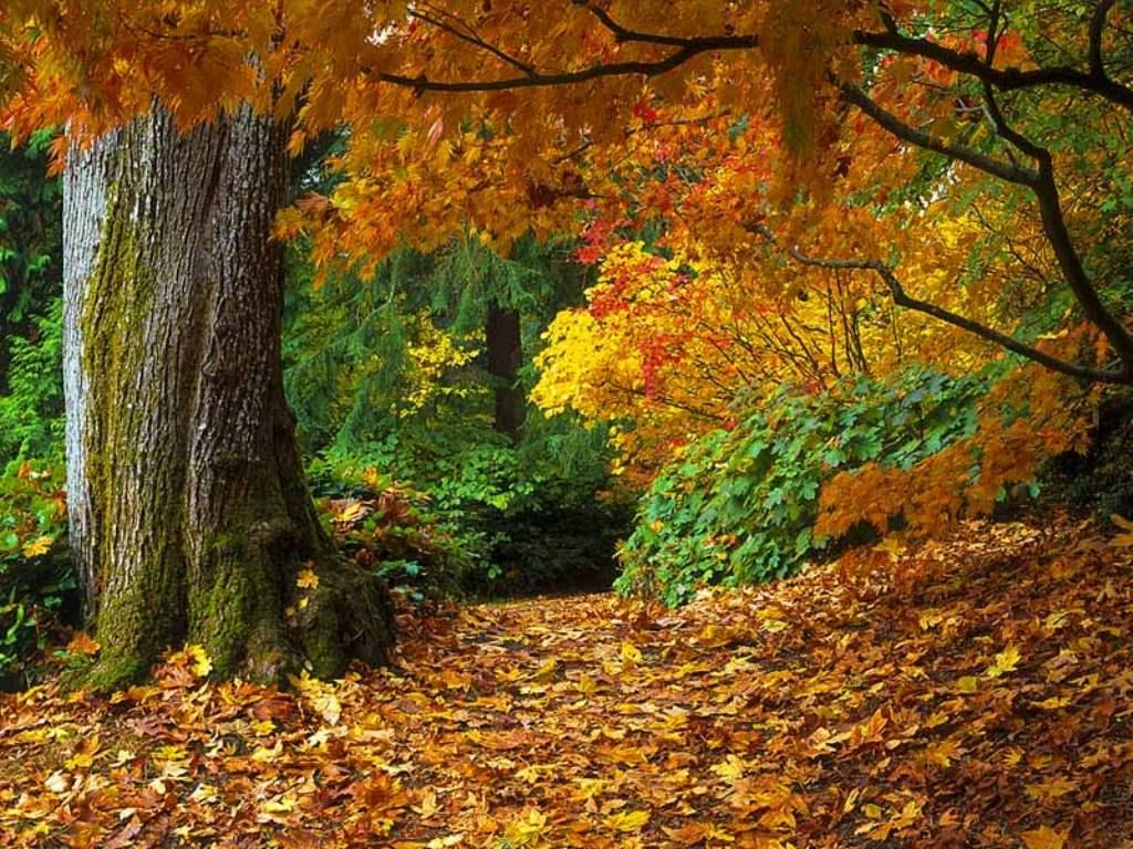 Осенний лес обои на рабочий стол   скачать бесплатно (3)
