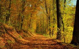 Осенний лес обои на рабочий стол   скачать бесплатно (4)