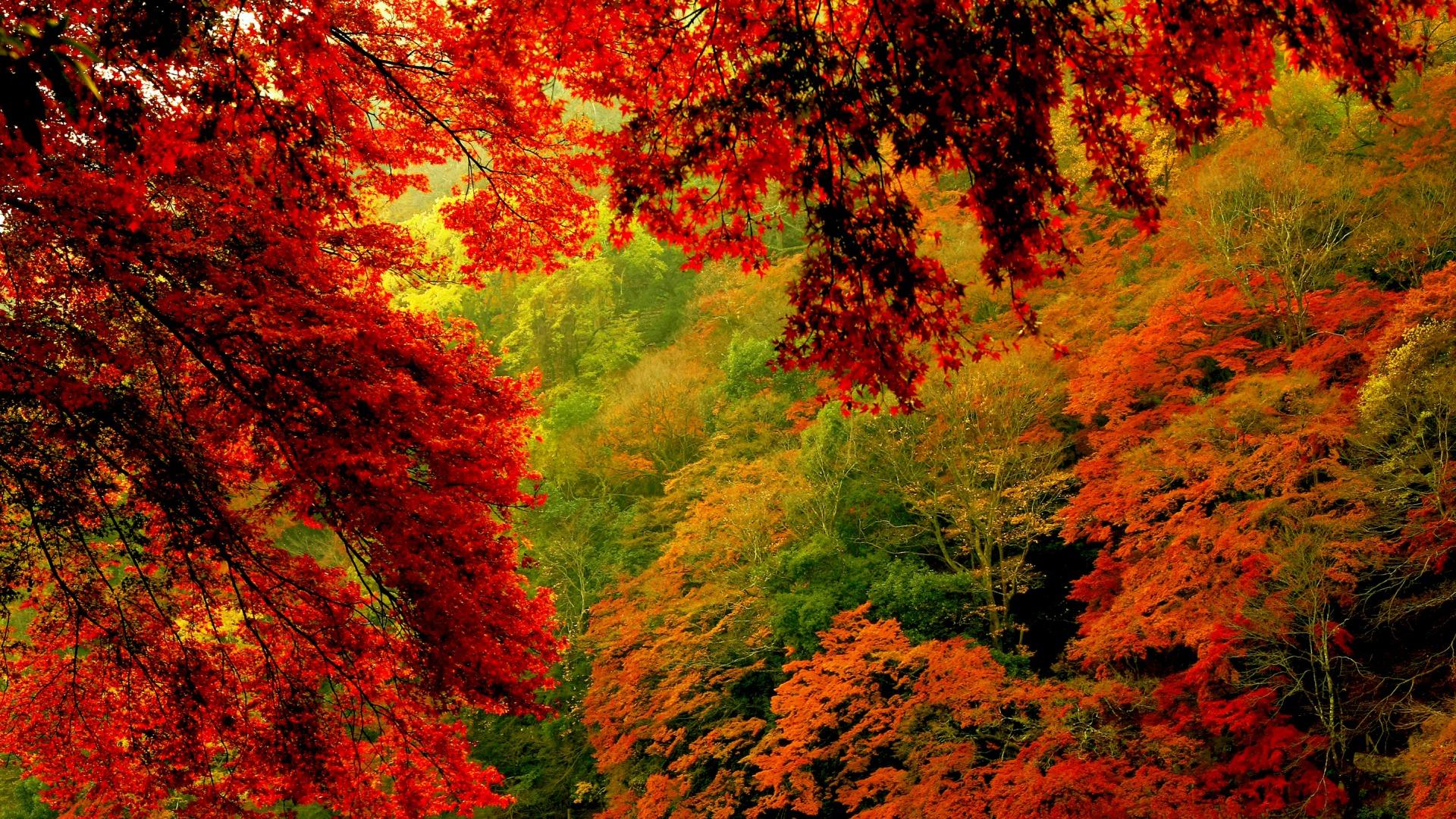 Осенний лес обои на рабочий стол   скачать бесплатно (5)