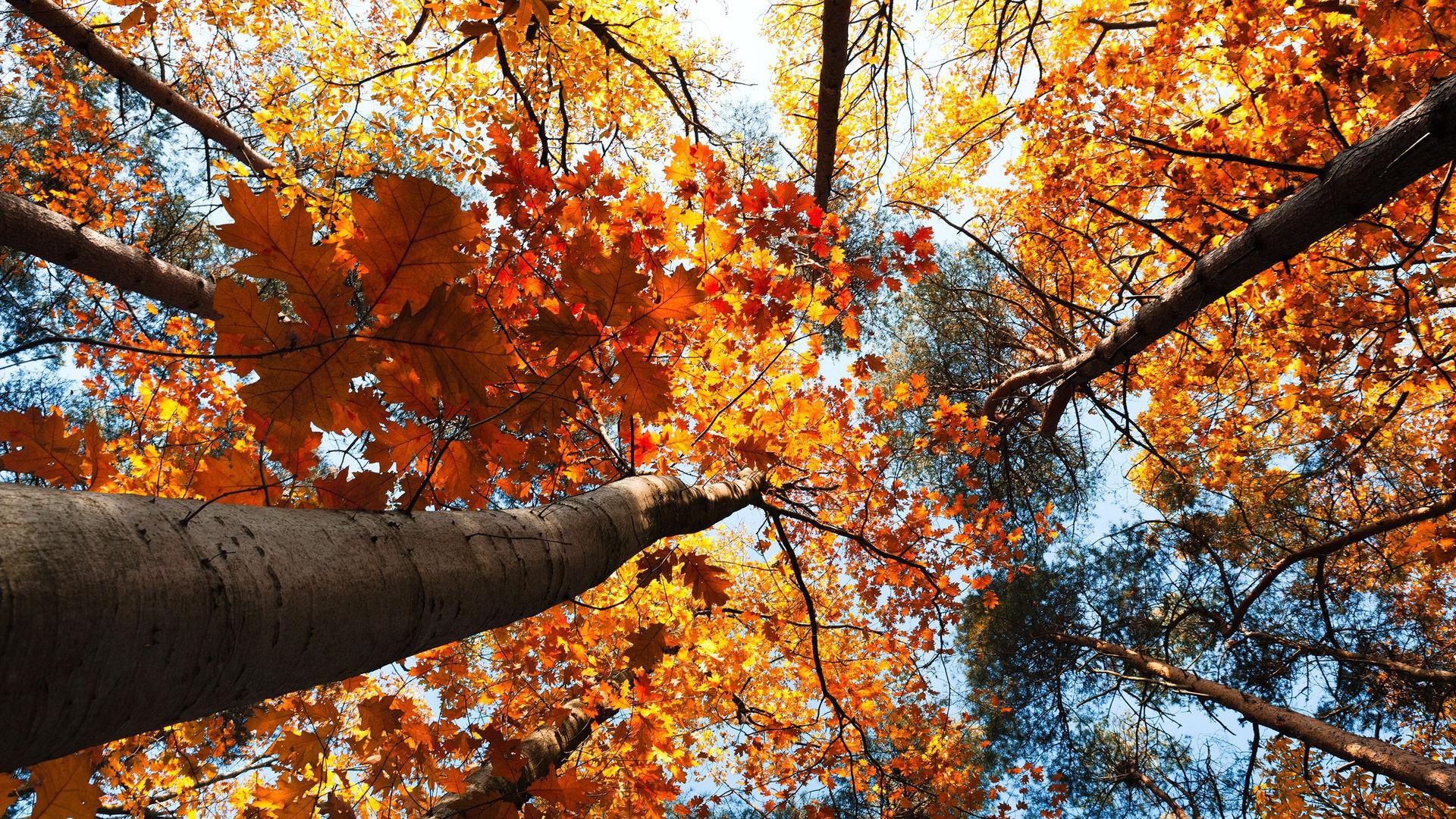 Осенний лес обои на рабочий стол   скачать бесплатно (6)