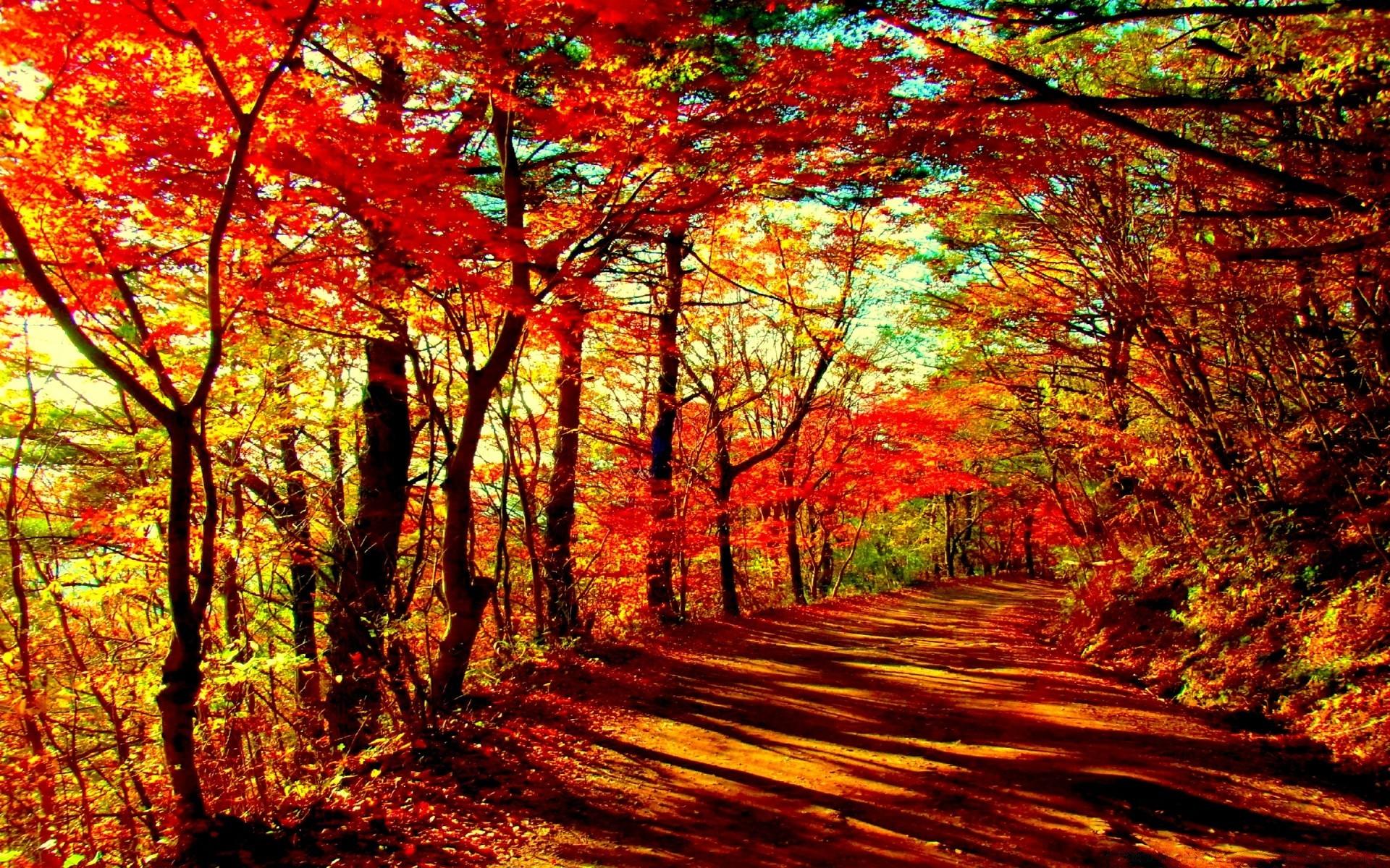 Осенний лес обои на рабочий стол   скачать бесплатно (7)