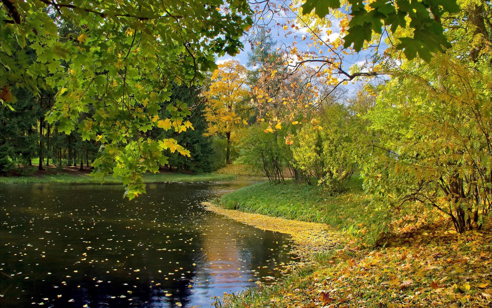 Осенний лес обои на рабочий стол   скачать бесплатно (9)