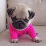 Прикольные животные в свитерах