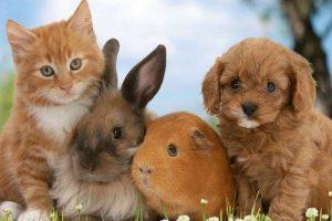 Фото домашних животных 012
