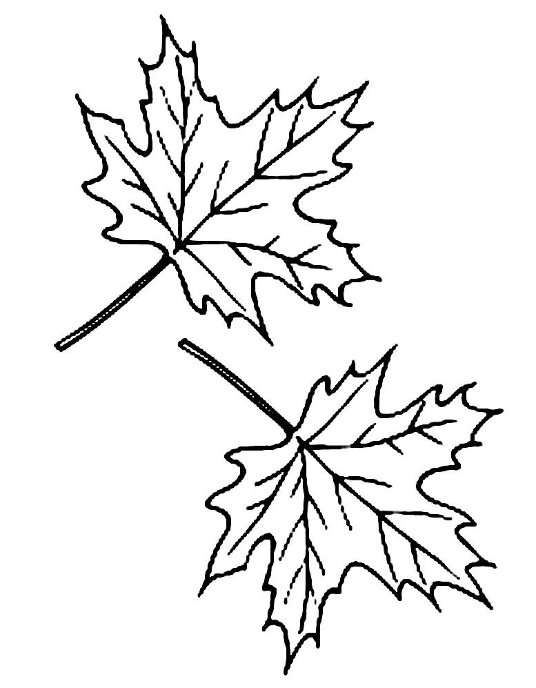 Черно белые картинки на тему осень для детей (30)