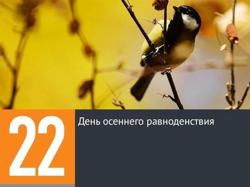 день осеннего одиночества 007