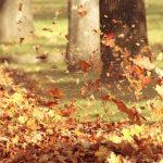 Открытки в день собирания осенних листьев