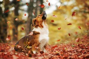 день шуршания листьями 014