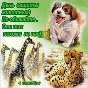 открытки на всемирный день животных 4 октября 014