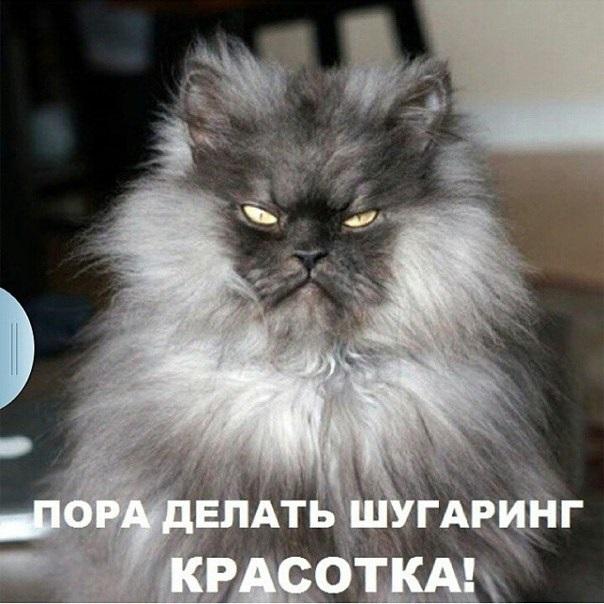 смешные картинки про шугаринг 011