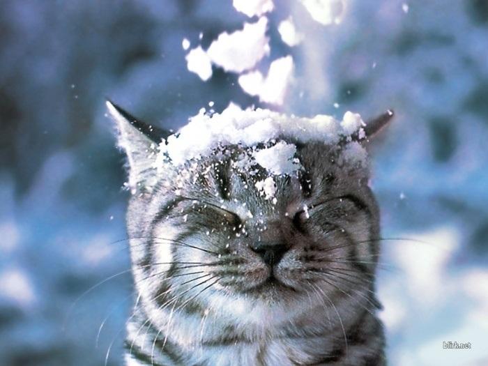 1 декабря Первый день зимы 22 001 007