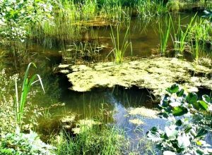 2 февраля Всемирный день водно болотных угодий 011