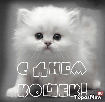 Всемирный день кошек 020