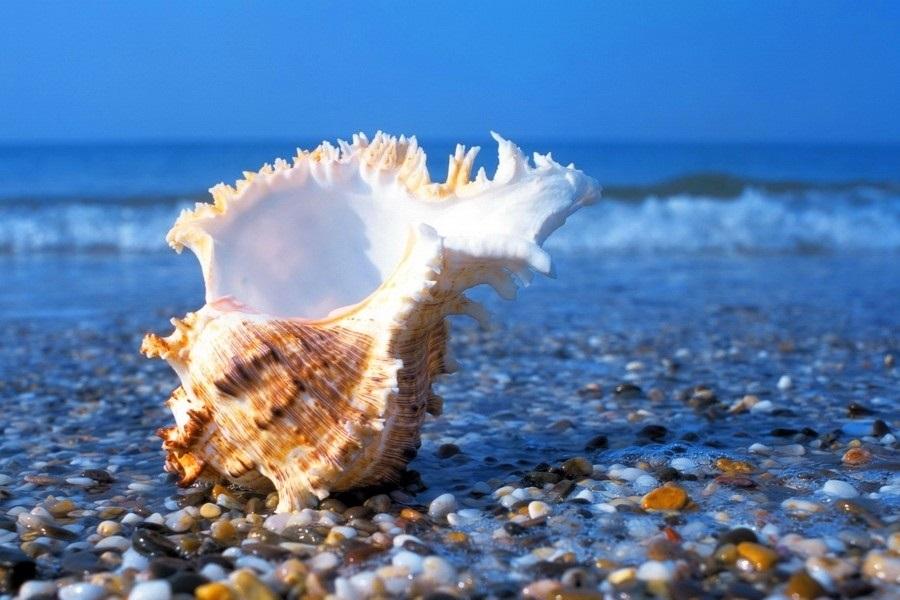Всемирный день моря 003