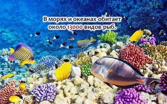 Всемирный день моря 005