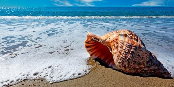 Всемирный день моря 010