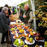 День Яблока (Apple Day) — красивые подборки