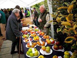 День Яблока (Apple Day) 025