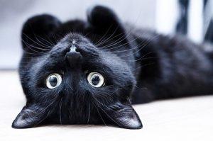 День защиты чёрных котов и кошек (Италия) 021