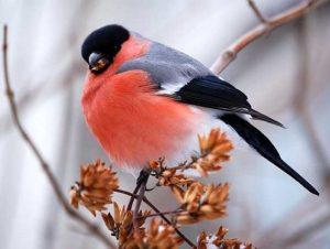 День кормления птиц овсяным печеньем   скачать бесплатно 017