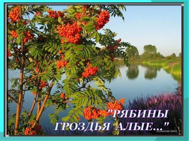 День красной рябины и прилетевших синиц 012