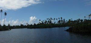 День посадки деревьев (Самоа)   подборка 021