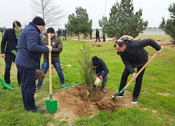 День посадки деревьев в Алжире 007