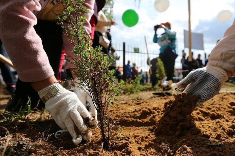 День посадки деревьев в Алжире 009