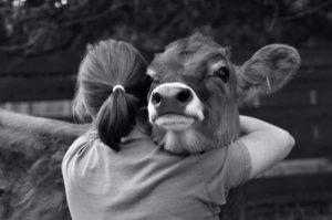 День работника ветеринарной службы Кубани 022