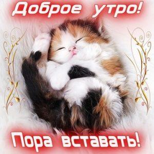 Доброе утро с котиком картинки016