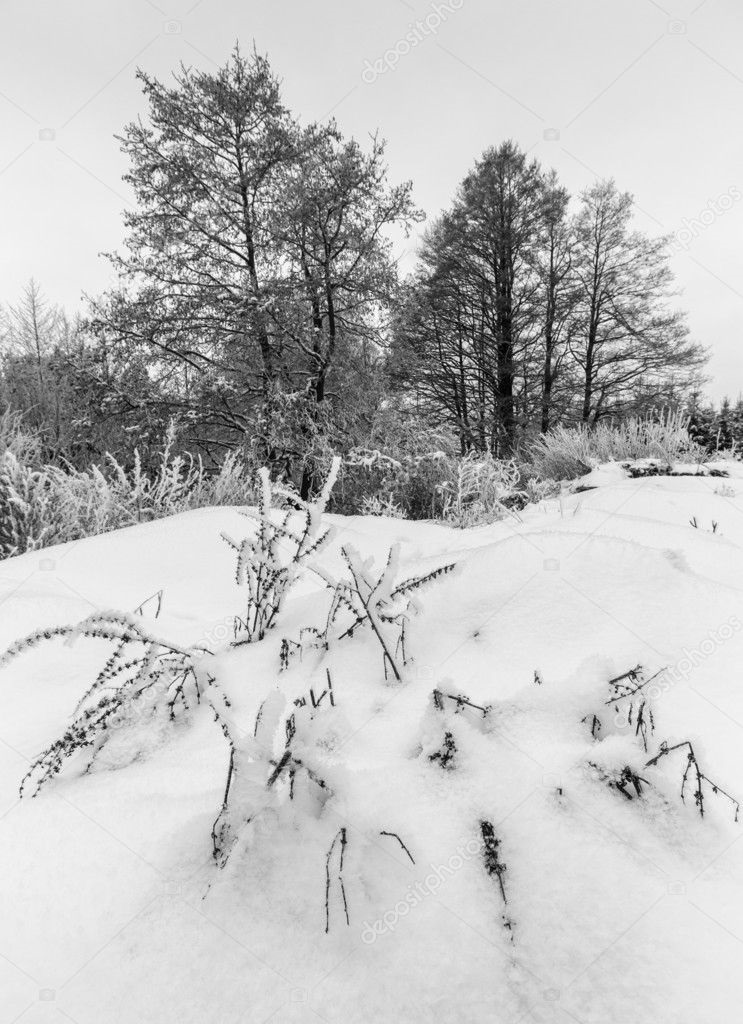 Зимний пейзаж черно белый 018