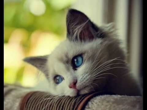 Картинка мой котик любимый 002
