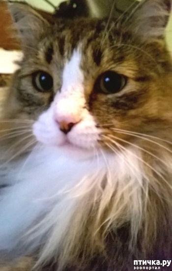 Картинка мой котик любимый 004
