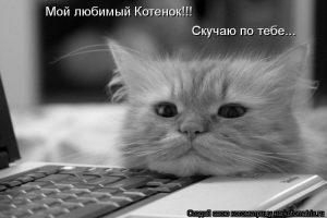 Картинка мой котик любимый 008