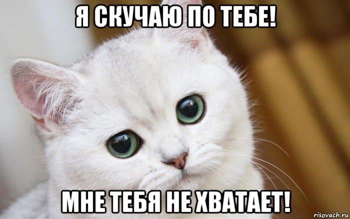 Картинка мой котик любимый 009