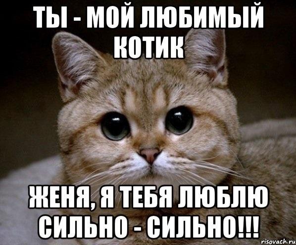 Картинка мой котик любимый 011