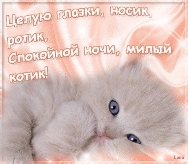 Картинка мой котик любимый 012
