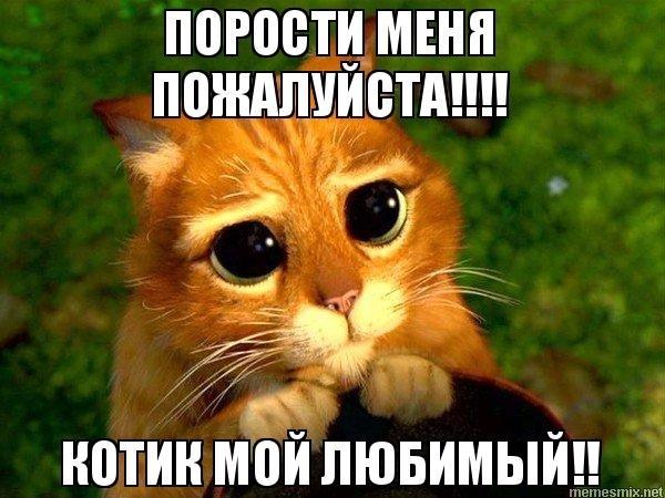 Картинка мой котик любимый 013