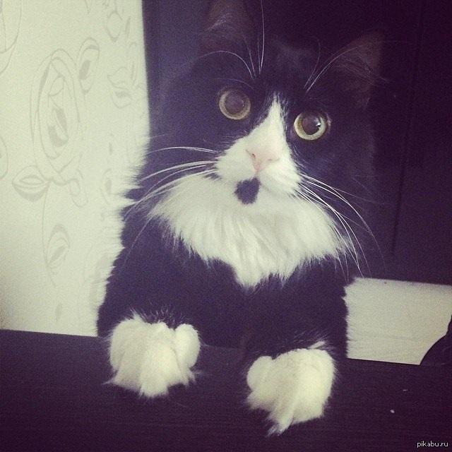 Картинка мой котик любимый 015