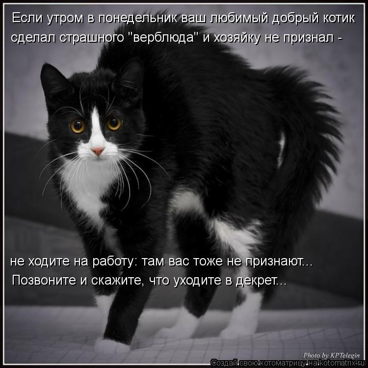 Картинка мой котик любимый 018