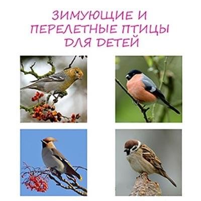 Красивые открытки и фото на день мигрирующих птиц015