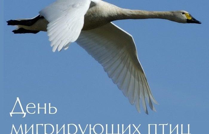 Лучшие фото на день мигрирующих птиц001