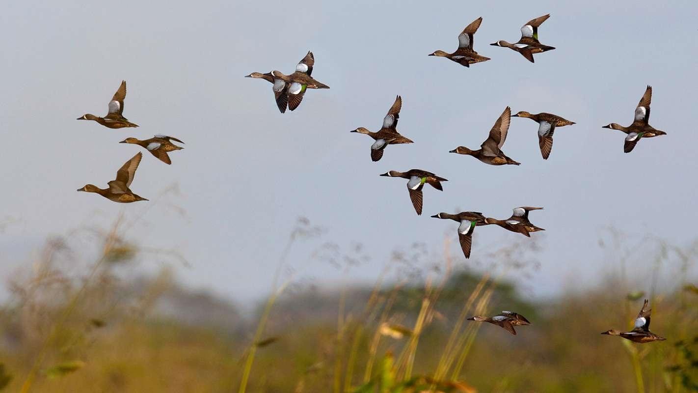 Лучшие фото на день мигрирующих птиц002