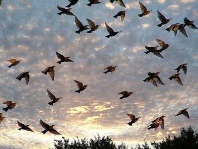 Лучшие фото на день мигрирующих птиц003